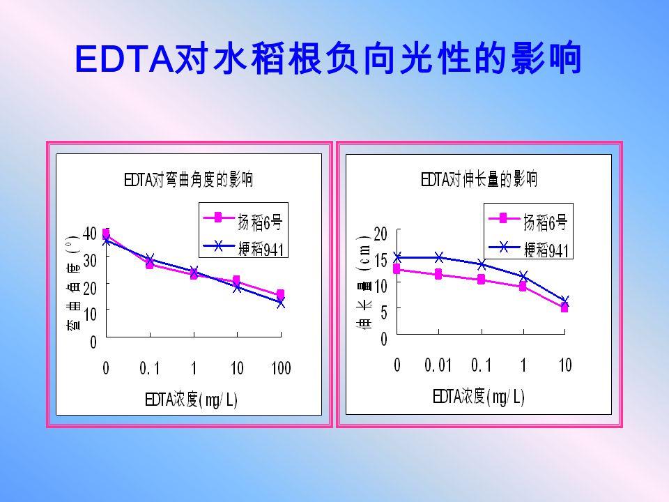 EDTA对水稻根负向光性的影响