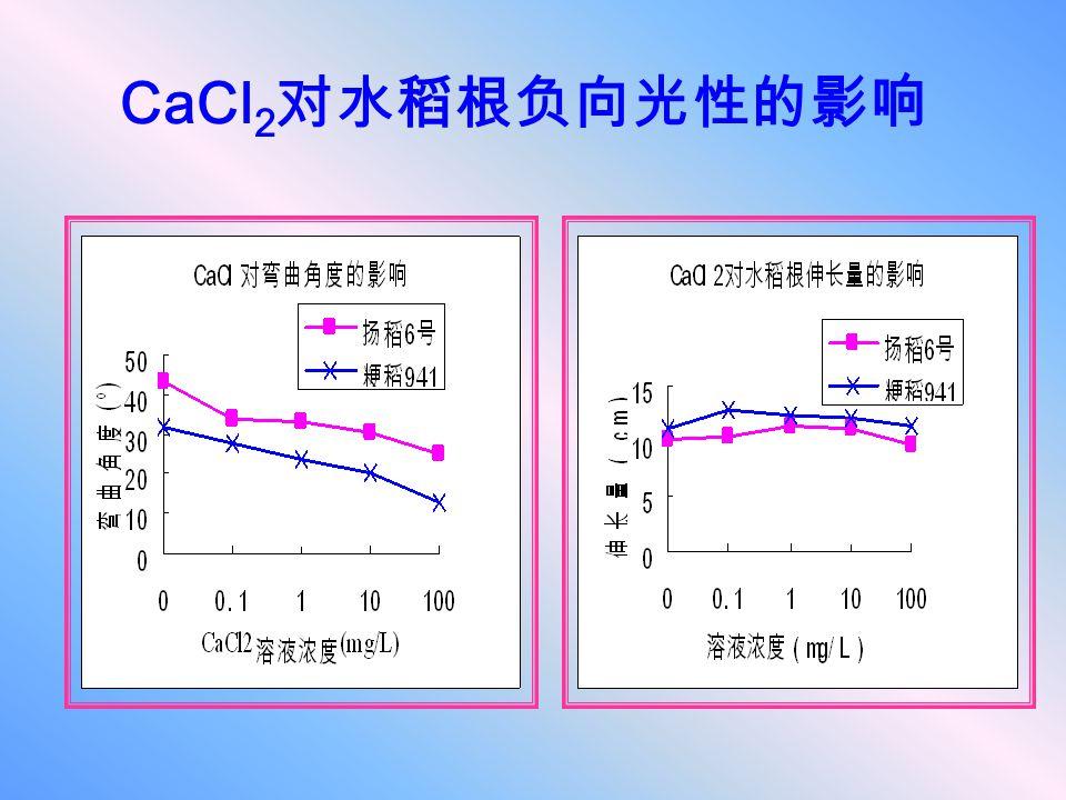 CaCl2对水稻根负向光性的影响
