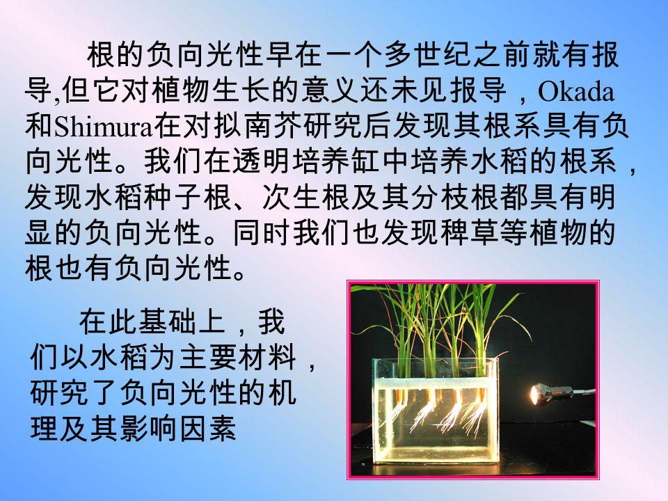 根的负向光性早在一个多世纪之前就有报导,但它对植物生长的意义还未见报导,Okada和Shimura在对拟南芥研究后发现其根系具有负向光性。我们在透明培养缸中培养水稻的根系,发现水稻种子根、次生根及其分枝根都具有明显的负向光性。同时我们也发现稗草等植物的根也有负向光性。