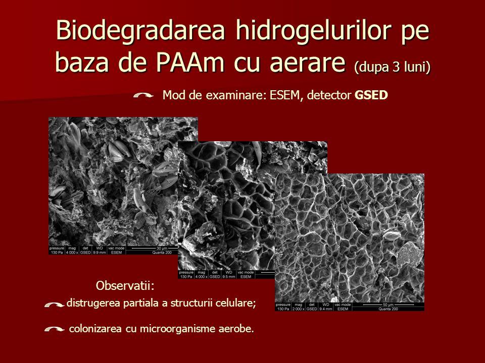 Biodegradarea hidrogelurilor pe baza de PAAm cu aerare (dupa 3 luni)