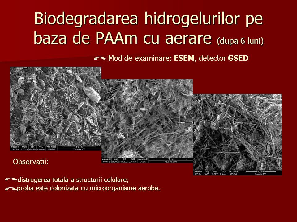 Biodegradarea hidrogelurilor pe baza de PAAm cu aerare (dupa 6 luni)