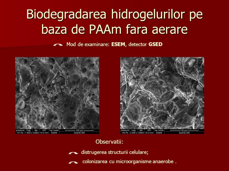 Biodegradarea hidrogelurilor pe baza de PAAm fara aerare