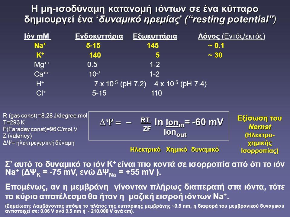Ιόν mM Ενδοκυττάρια Εξωκυττάρια Λόγος (Εντός/εκτός)