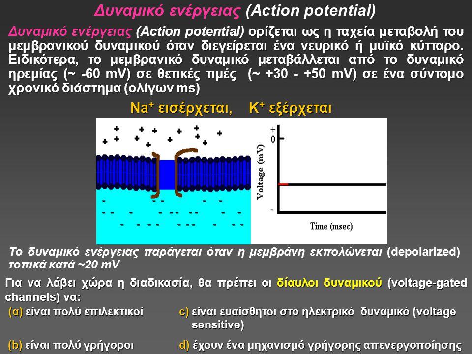Δυναμικό ενέργειας (Action potential)