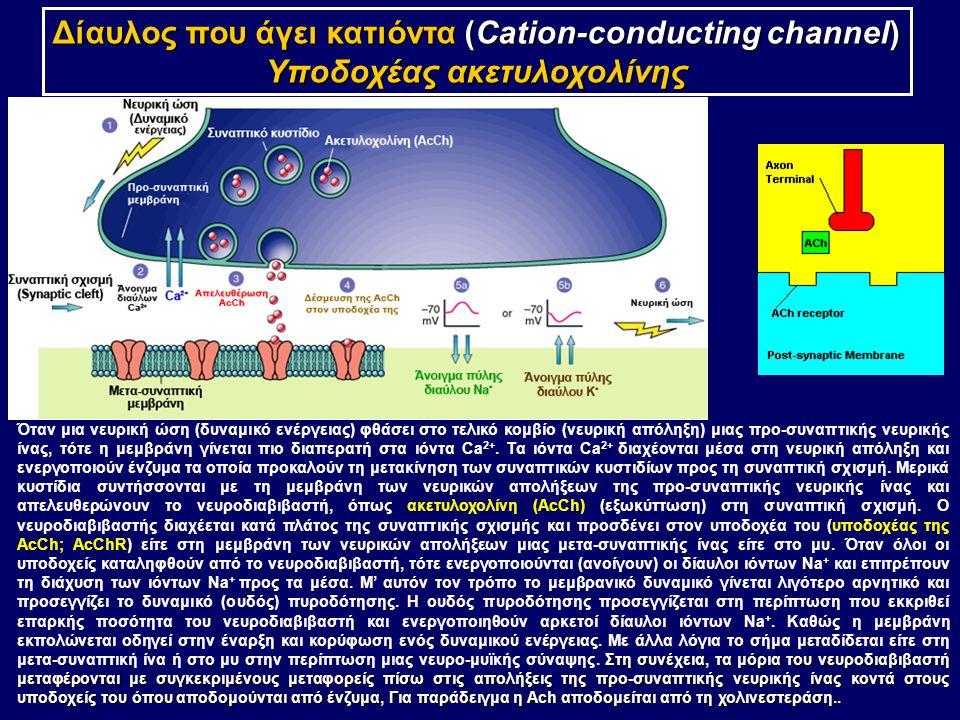 Δίαυλος που άγει κατιόντα (Cation-conducting channel)