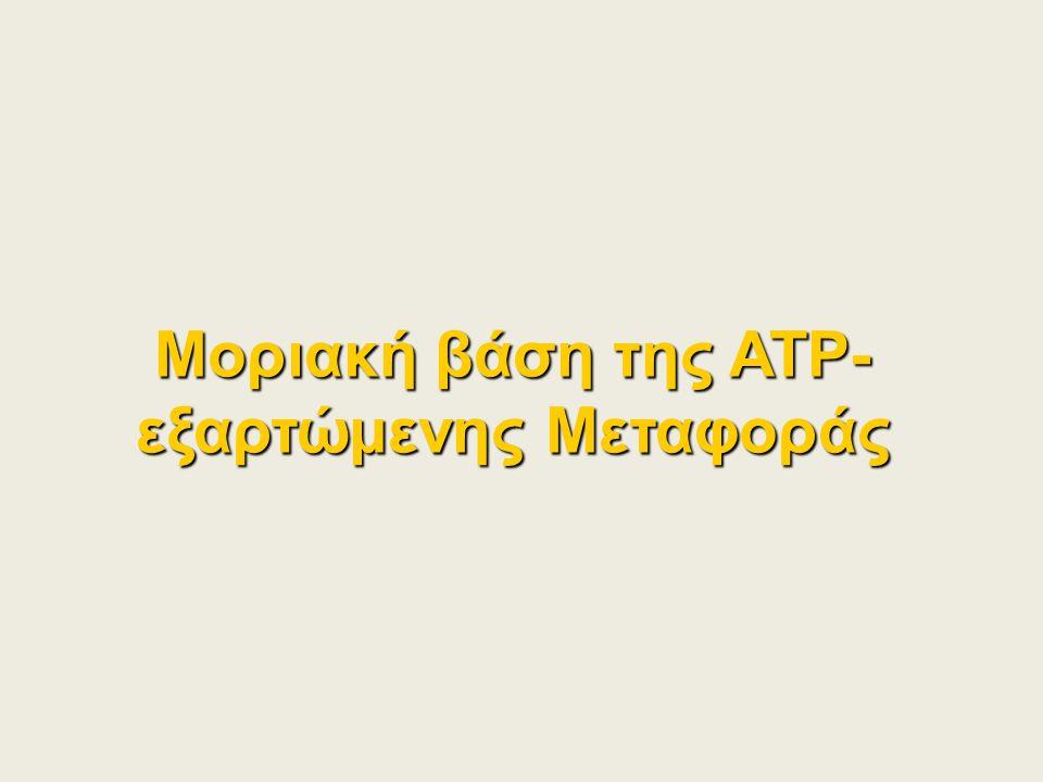 Μοριακή βάση της ATP-εξαρτώμενης Μεταφοράς