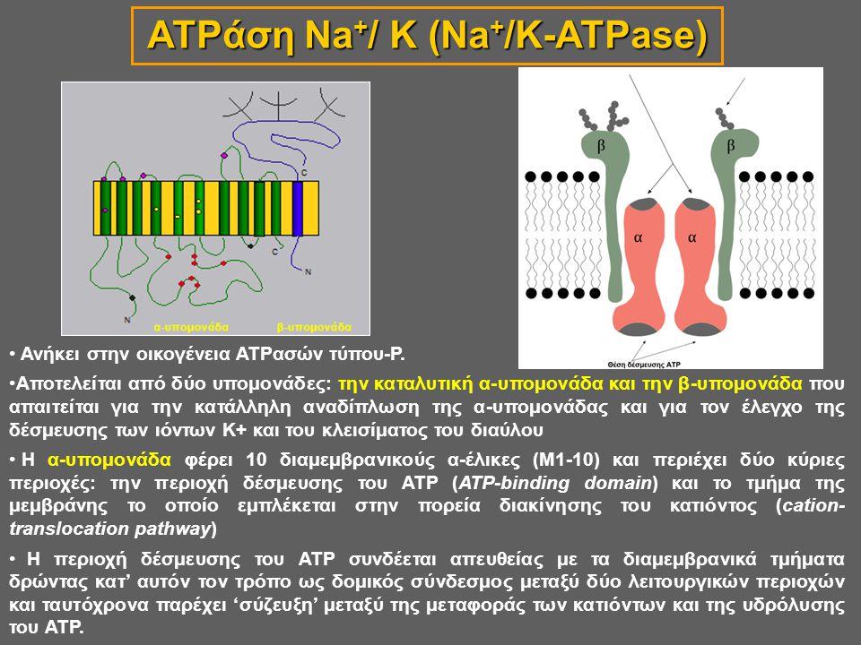 ATPάση Na+/ K (Na+/K-ATPase)