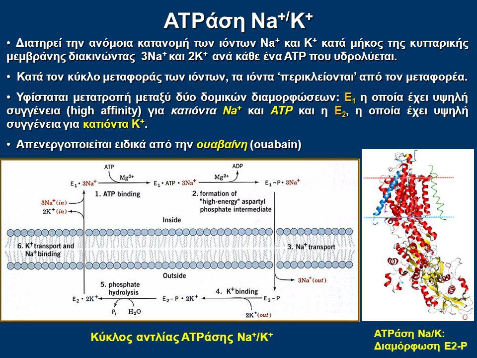 ATPάση Na+/K+ Κύκλος αντλίας ATPάσης Na+/K+