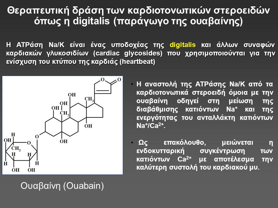 Θεραπευτική δράση των καρδιοτονωτικών στεροειδών όπως η digitalis (παράγωγο της ουαβαίνης)