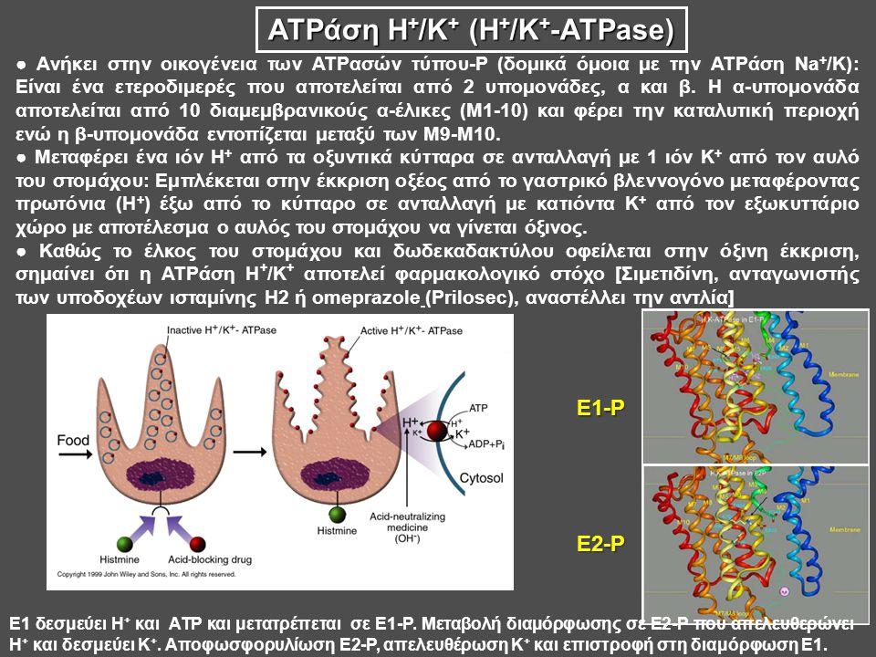 ATPάση H+/K+ (H+/K+-ATPase)