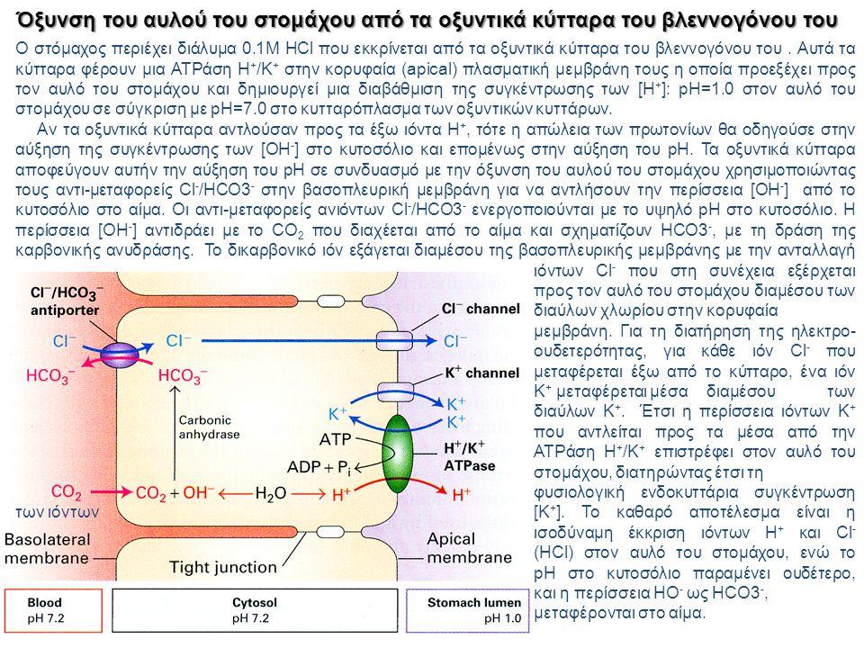 Όξυνση του αυλού του στομάχου από τα οξυντικά κύτταρα του βλεννογόνου του