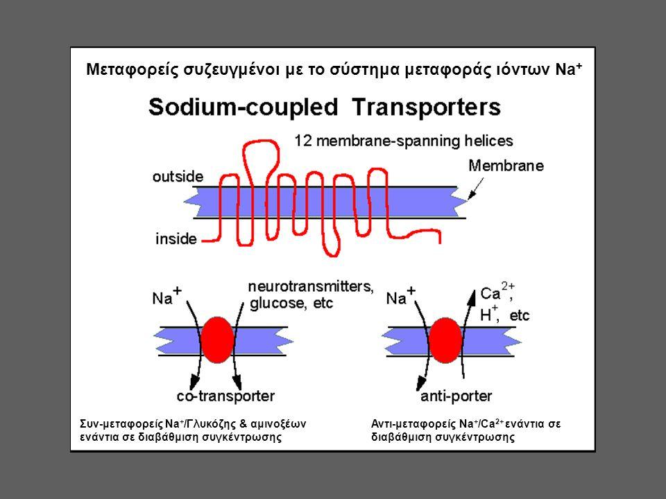 Μεταφορείς συζευγμένοι με το σύστημα μεταφοράς ιόντων Na+