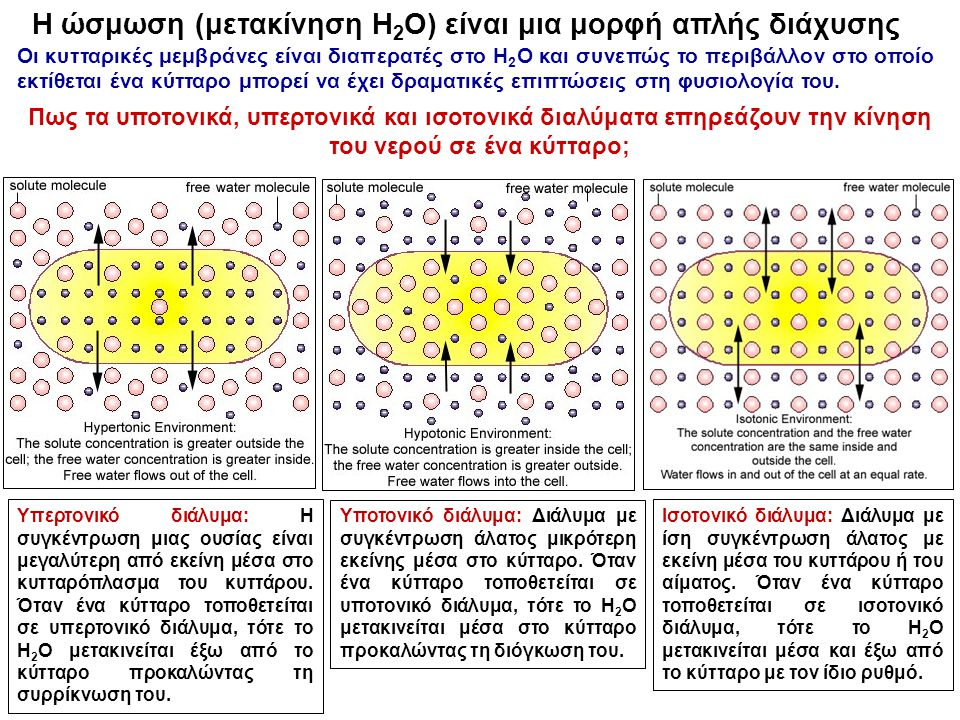 Η ώσμωση (μετακίνηση H2O) είναι μια μορφή απλής διάχυσης
