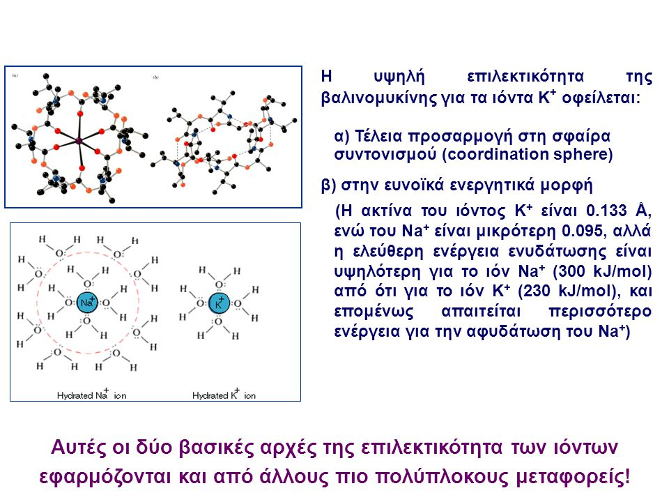 Η υψηλή επιλεκτικότητα της βαλινομυκίνης για τα ιόντα K+ οφείλεται: