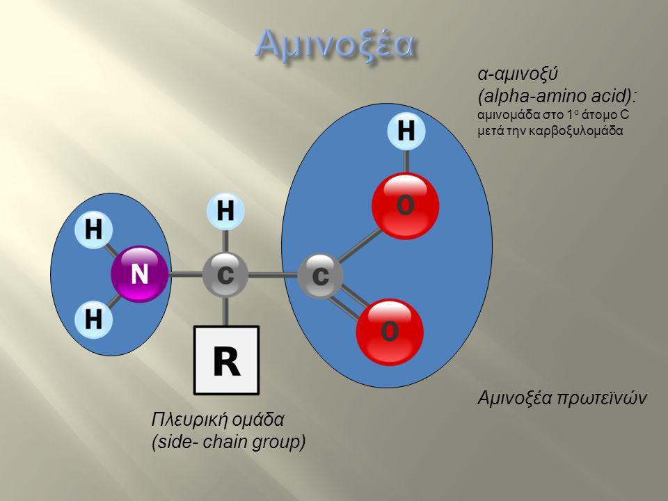 Αμινοξέα α-αμινοξύ (alpha-amino acid): Αμινοξέα πρωτεϊνών