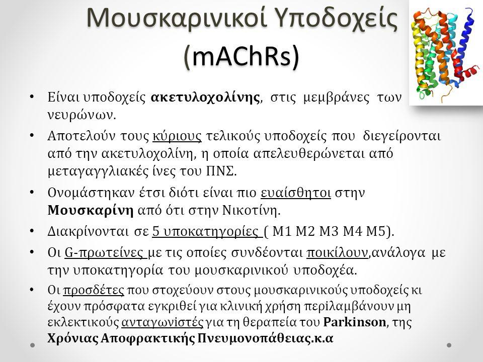 Μουσκαρινικοί Υποδοχείς (mAChRs)