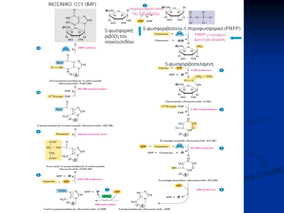 5-φωσφοριβοσυλο-1-πυροφωσφορικό (PRPP)
