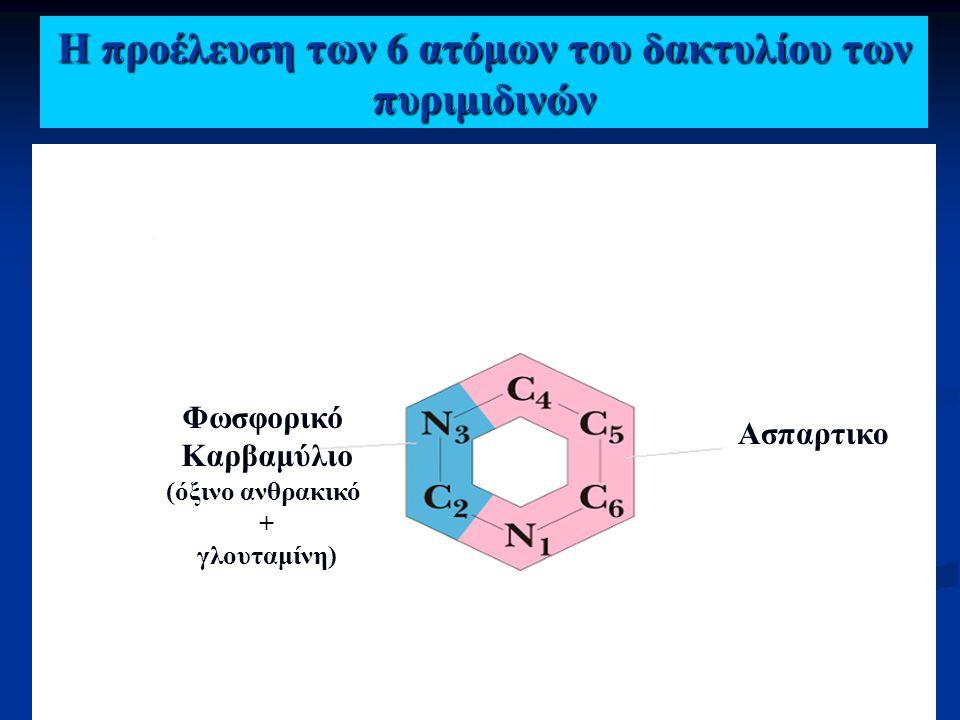 Η προέλευση των 6 ατόμων του δακτυλίου των πυριμιδινών