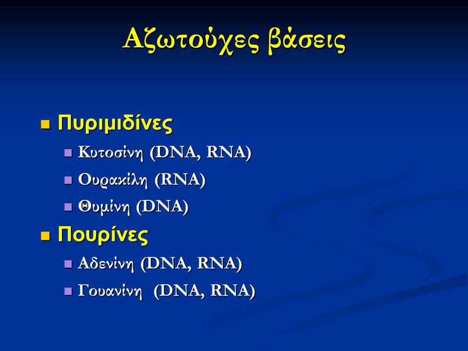 Αζωτούχες βάσεις Πυριμιδίνες Πουρίνες Κυτοσίνη (DNA, RNA)