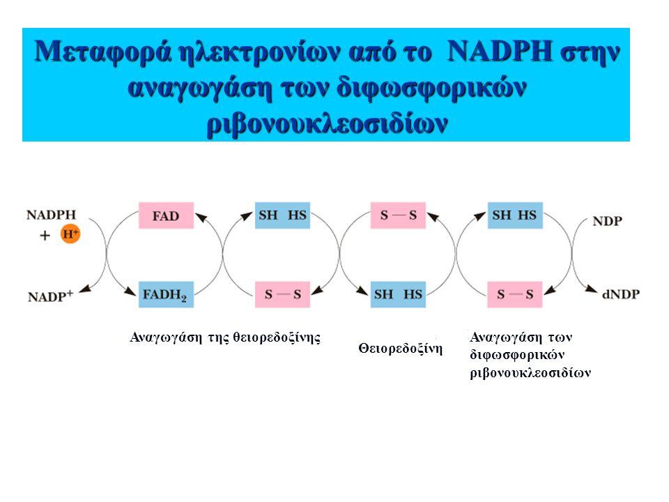 Μεταφορά ηλεκτρονίων από το NADPH στην αναγωγάση των διφωσφορικών ριβονουκλεοσιδίων
