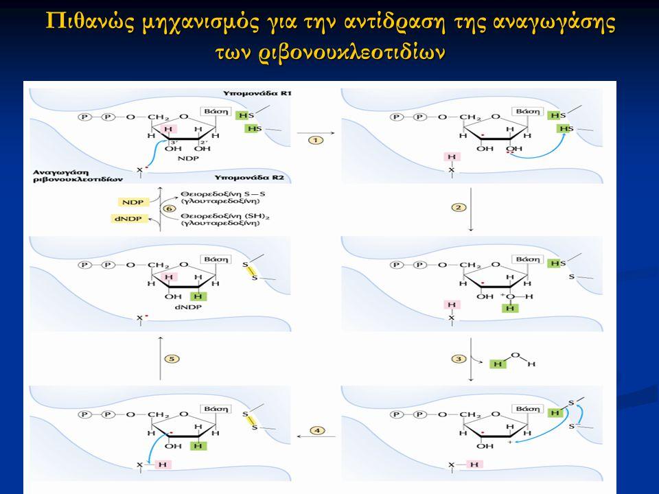 Πιθανώς μηχανισμός για την αντίδραση της αναγωγάσης των ριβονουκλεοτιδίων