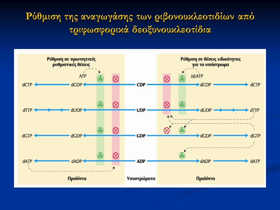 Ρύθμιση της αναγωγάσης των ριβονουκλεοτιδίων από τριφωσφορικά δεοξυνουκλεοτίδια