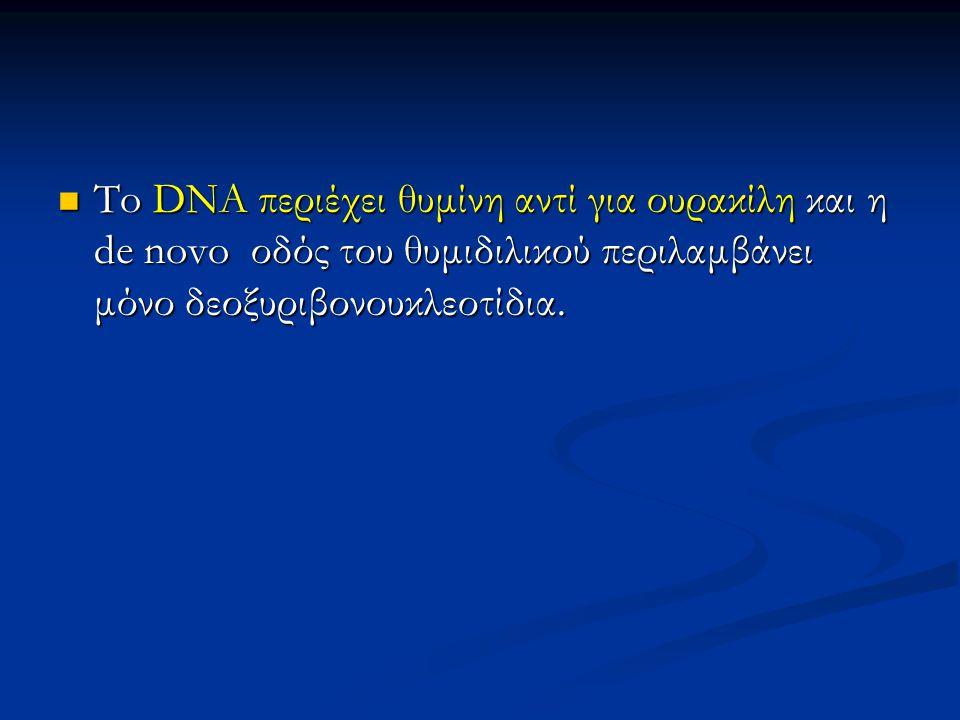 To DNA περιέχει θυμίνη αντί για ουρακίλη και η de novo οδός του θυμιδιλικού περιλαμβάνει μόνο δεοξυριβονουκλεοτίδια.