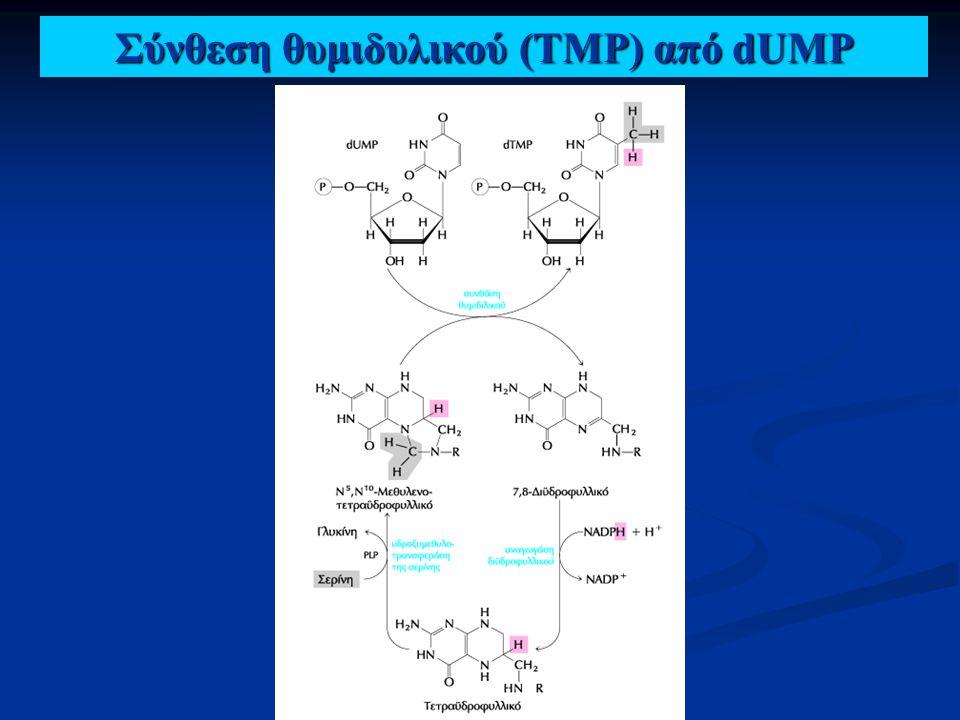 Σύνθεση θυμιδυλικού (TMP) από dUMP