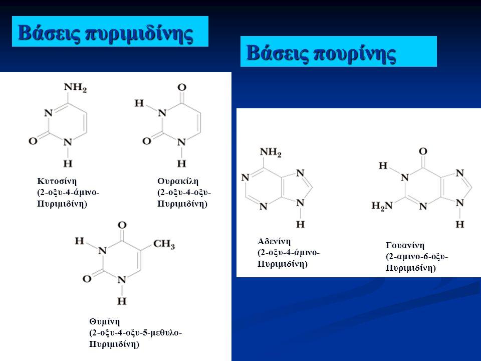 Βάσεις πυριμιδίνης Βάσεις πουρίνης Κυτοσίνη (2-οξυ-4-άμινο-