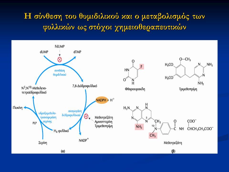Η σύνθεση του θυμιδιλικού και ο μεταβολισμός των φυλλικών ως στόχοι χημειοθεραπευτικών