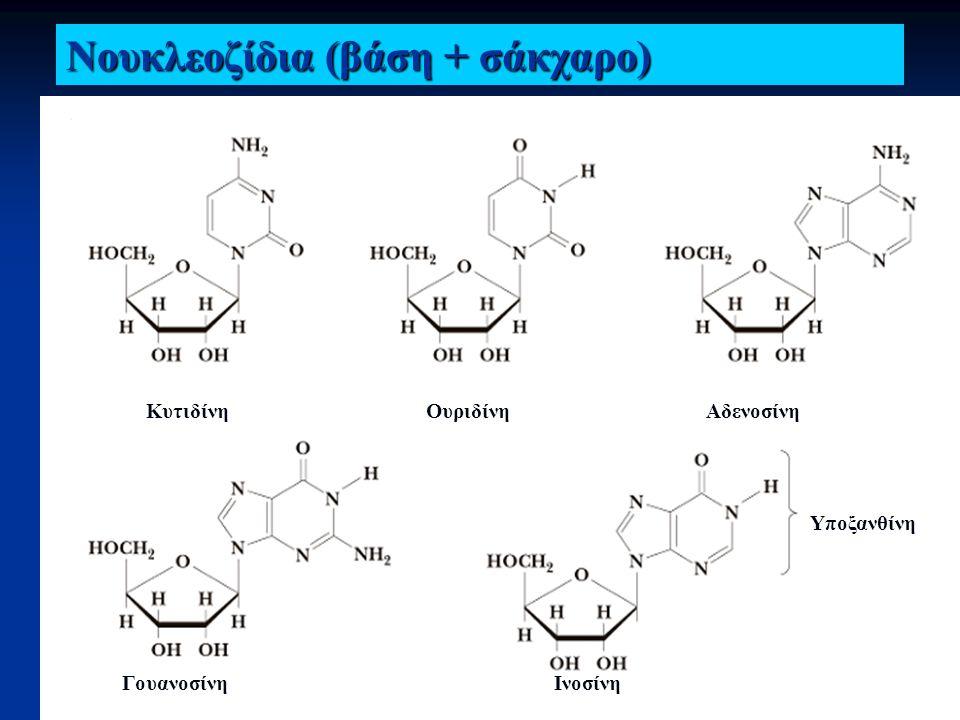 Νουκλεοζίδια (βάση + σάκχαρο)