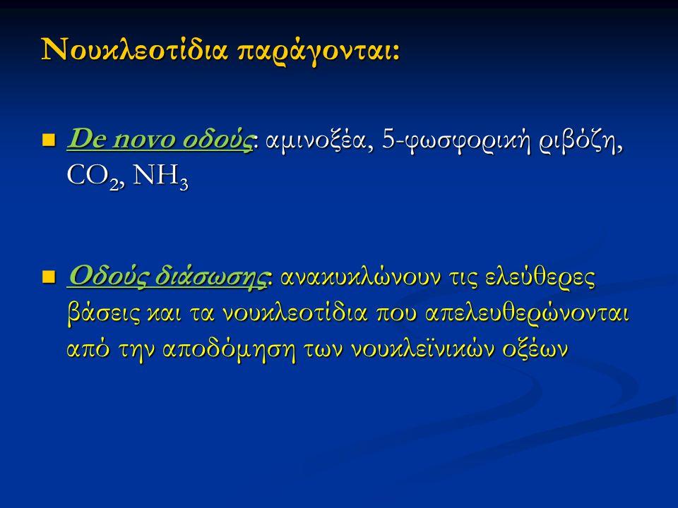 Nουκλεοτίδια παράγονται: