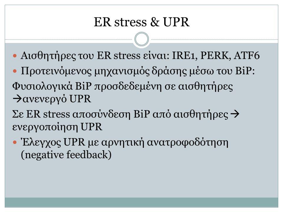ER stress & UPR Αισθητήρες του ER stress είναι: IRE1, PERK, ATF6