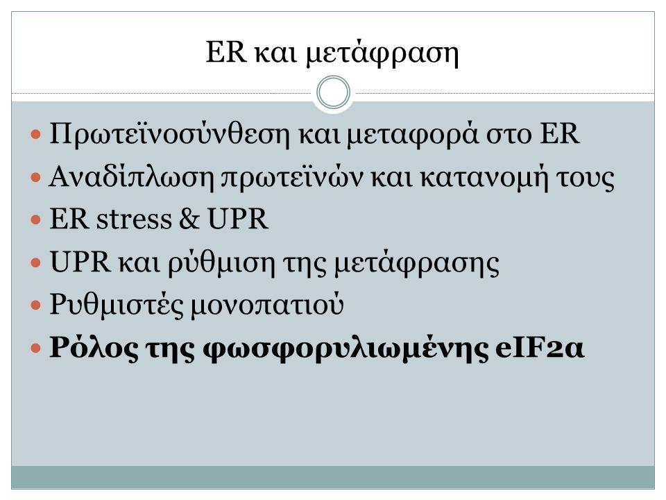 ER και μετάφραση Πρωτεϊνοσύνθεση και μεταφορά στο ER