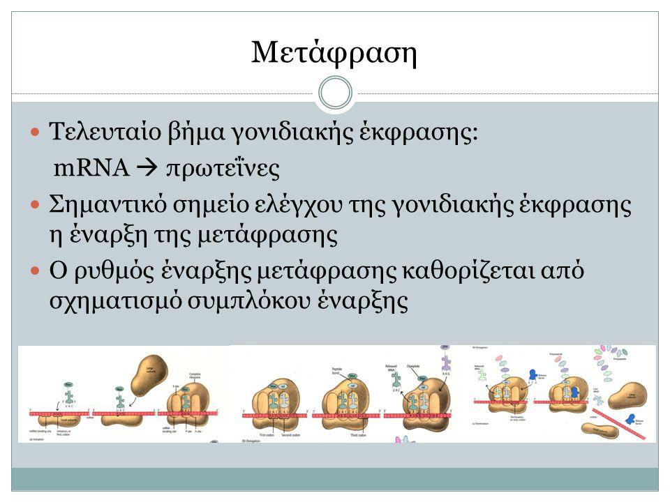 Μετάφραση Τελευταίο βήμα γονιδιακής έκφρασης: mRNA  πρωτεΐνες