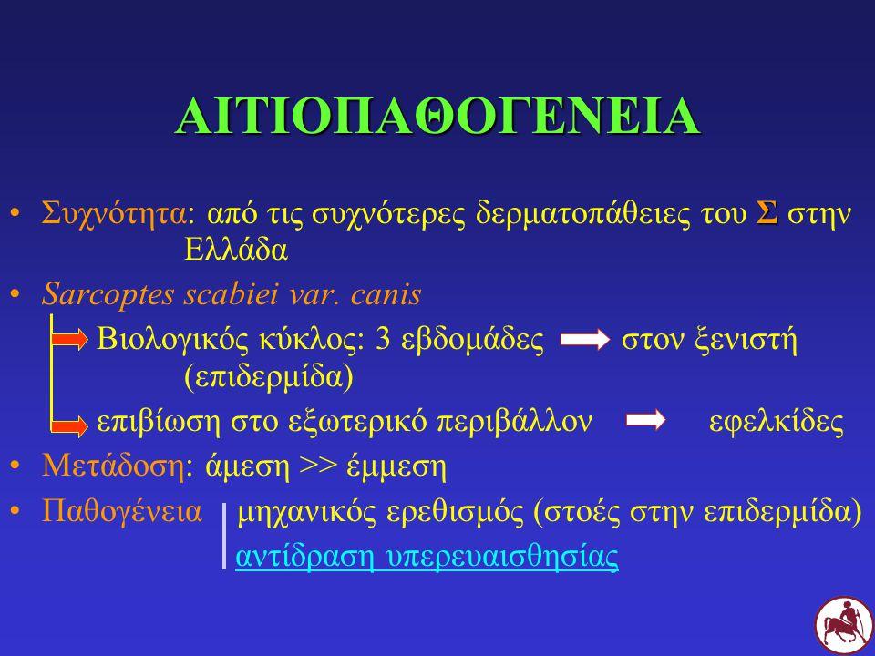 ΑΙΤΙΟΠΑΘΟΓΕΝΕΙΑ Συχνότητα: από τις συχνότερες δερματοπάθειες του Σ στην Ελλάδα. Sarcoptes scabiei var. canis.