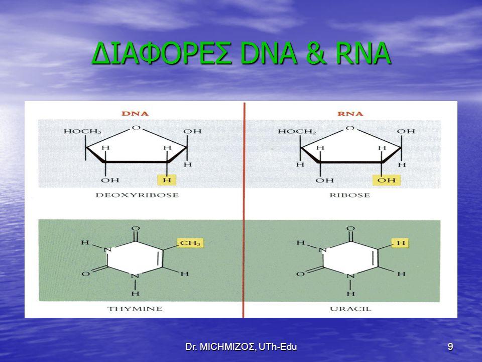 ΔΙΑΦΟΡΕΣ DNA & RNA Dr. ΜΙCHΜΙΖΟΣ, UTh-Edu