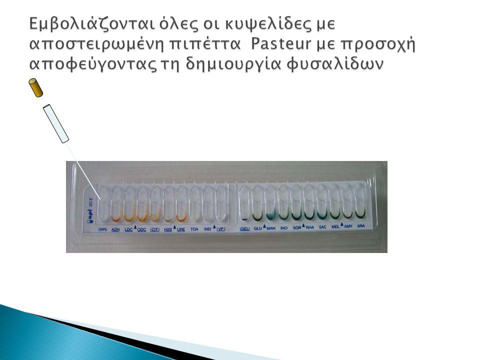 Εμβολιάζονται όλες οι κυψελίδες με αποστειρωμένη πιπέττα Pasteur με προσοχή αποφεύγοντας τη δημιουργία φυσαλίδων