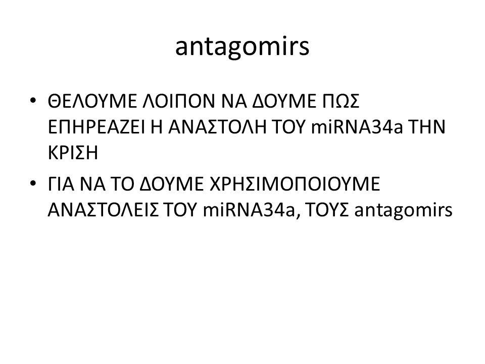 antagomirs ΘΕΛΟΥΜΕ ΛΟΙΠΟΝ ΝΑ ΔΟΥΜΕ ΠΩΣ ΕΠΗΡΕΑΖΕΙ Η ΑΝΑΣΤΟΛΗ ΤΟΥ miRNA34a ΤΗΝ ΚΡΙΣΗ.