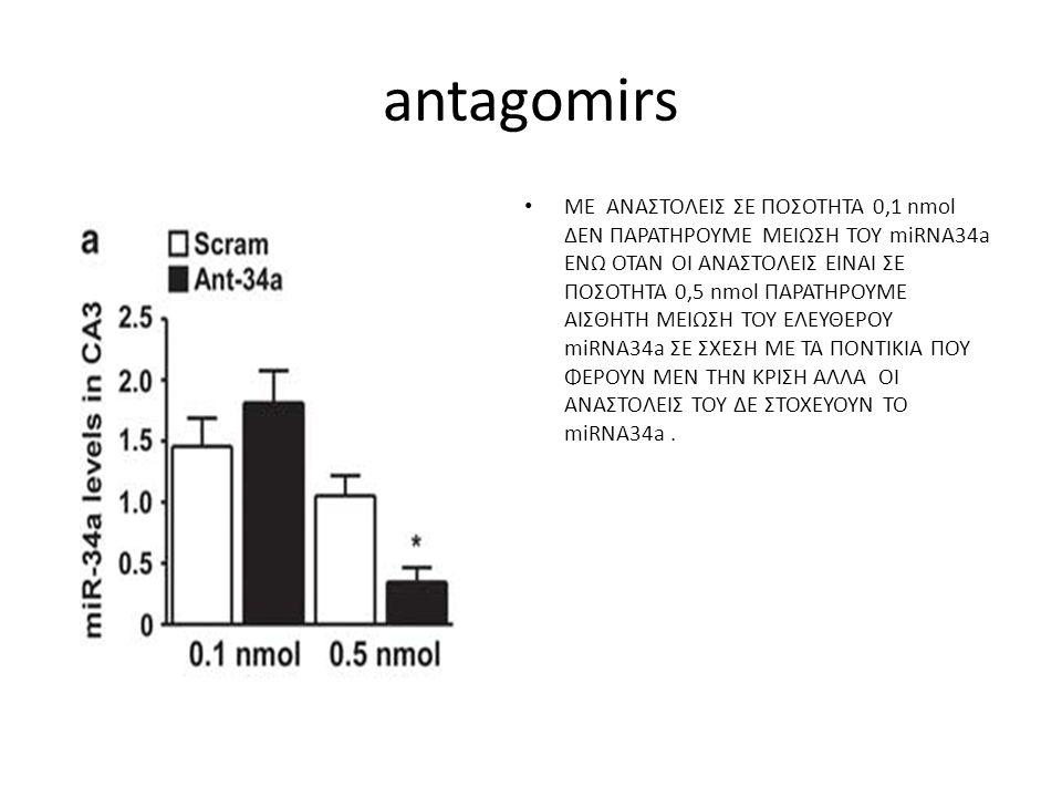 antagomirs