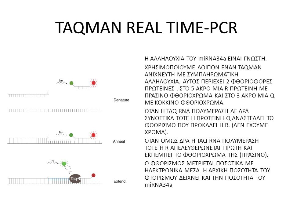 TAQMAN REAL TIME-PCR
