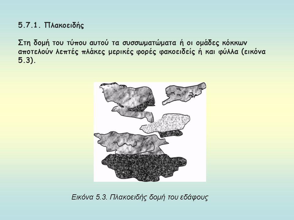 5.7.1. Πλακοειδής