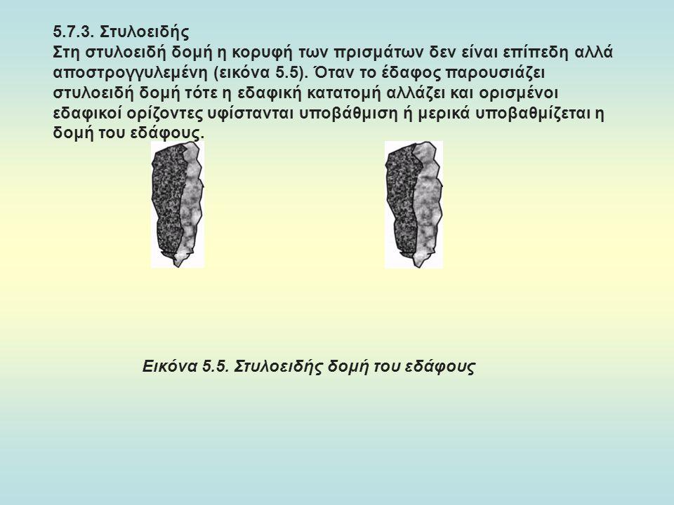 5.7.3. Στυλοειδής