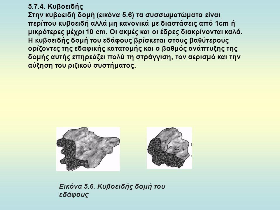 5.7.4. Κυβοειδής