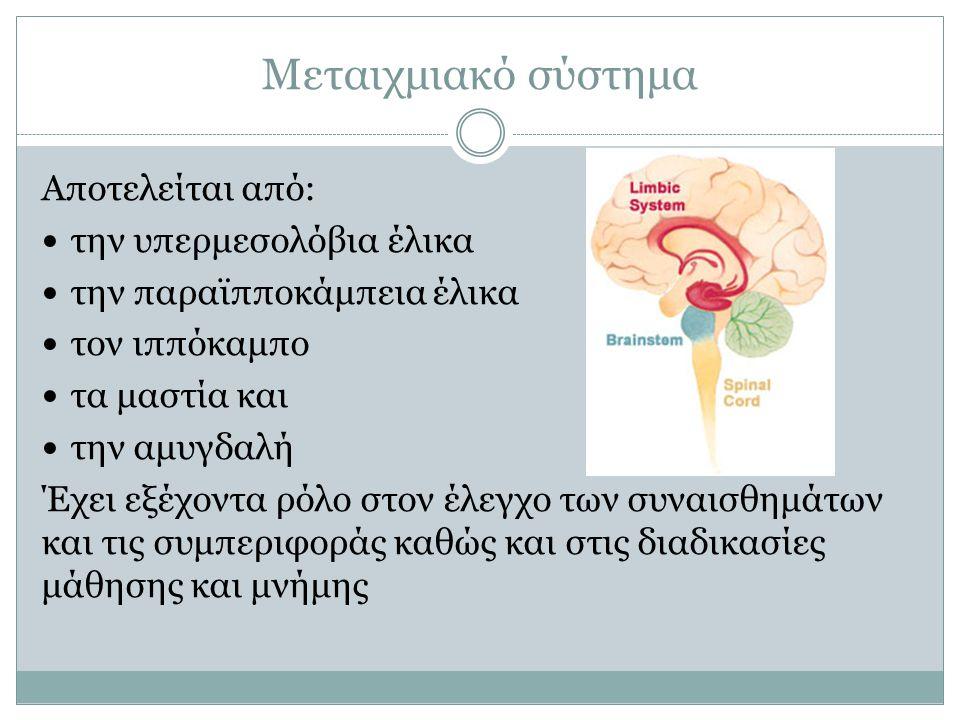 Μεταιχμιακό σύστημα Αποτελείται από: την υπερμεσολόβια έλικα