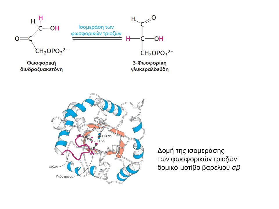 Δομή της ισομεράσης των φωσφορικών τριοζών: δομικό μοτίβο βαρελιού αβ