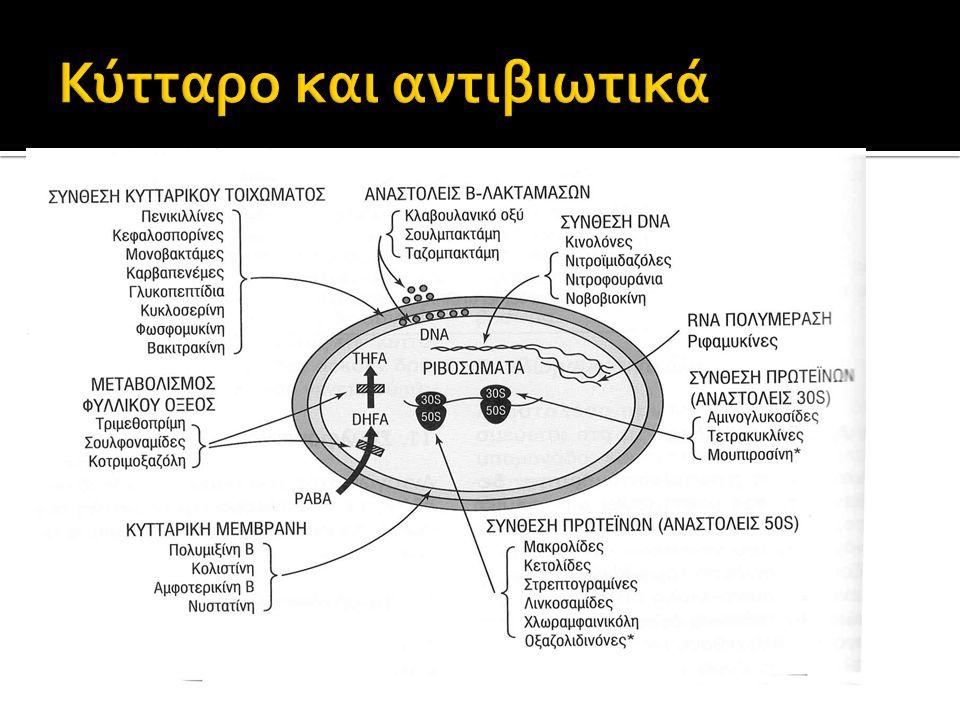 Κύτταρο και αντιβιωτικά