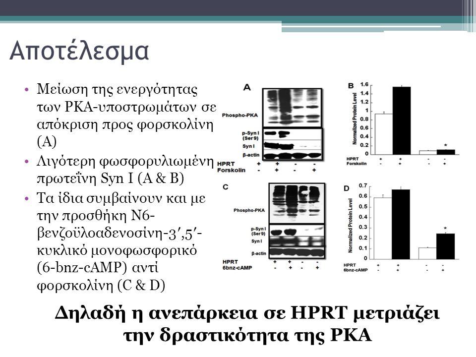 Δηλαδή η ανεπάρκεια σε HPRT μετριάζει την δραστικότητα της PKA