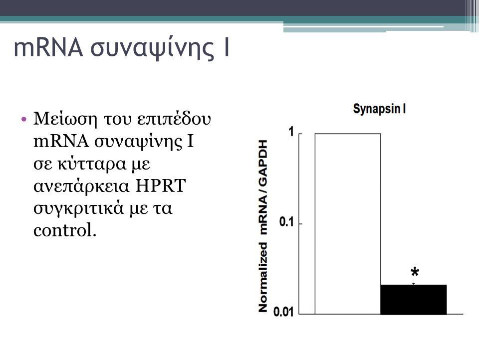 mRNA συναψίνης Ι Μείωση του επιπέδου mRNA συναψίνης Ι σε κύτταρα με ανεπάρκεια HPRT συγκριτικά με τα control.