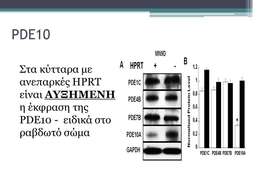 PDE10 Στα κύτταρα με ανεπαρκές HPRT είναι ΑΥΞΗΜΕΝΗ η έκφραση της PDE10 - ειδικά στο ραβδωτό σώμα.